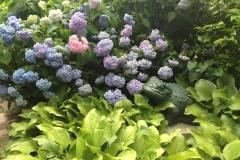 LW Perennials Annuals 1