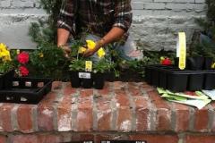 LW Perennials Annuals 2