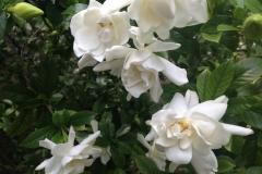 LW Perennials Annuals 3