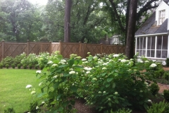 LW Perennials Annuals 4