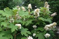 LW Perennials Annuals 7