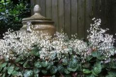 LW Perennials Annuals 8