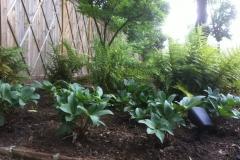 LW Perennials Annuals 9