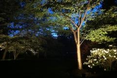 LW Lighting 3