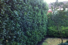 LW Trees, Shrubs 8